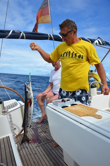 Barracuda frisch geangelt in der Karibik
