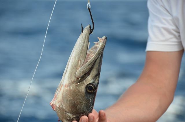 Barracuda_nicht ungefährlich