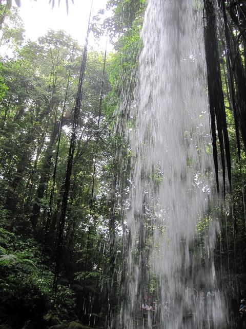 Dschungeltour auf Domenica