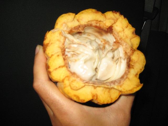 so sieht frischer Kakao aus