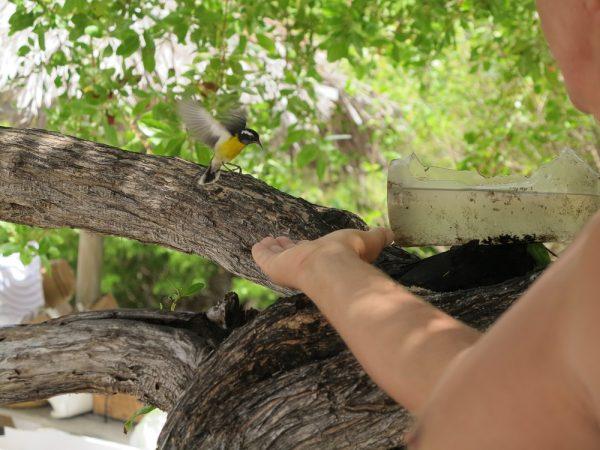 Zuckerverrückte Vögel fressen einem aus der Hand