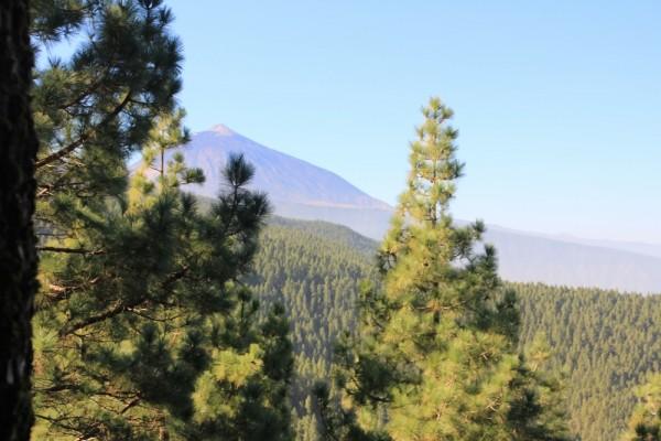 Toller Blick auf den Teide