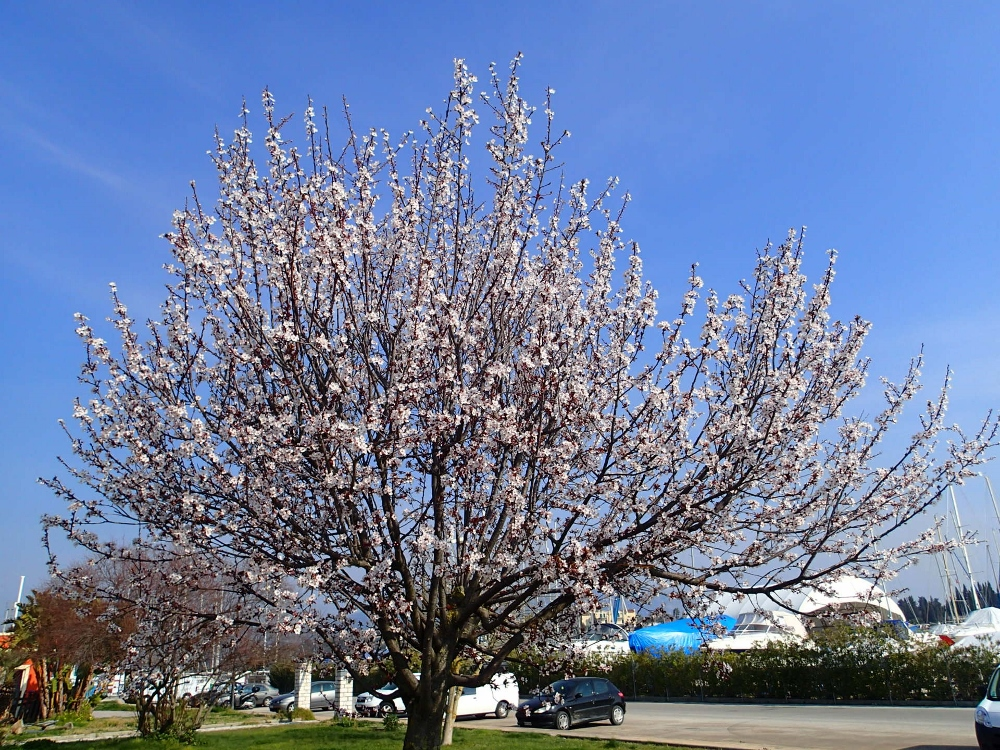 Frühlingserwachen in Korfu