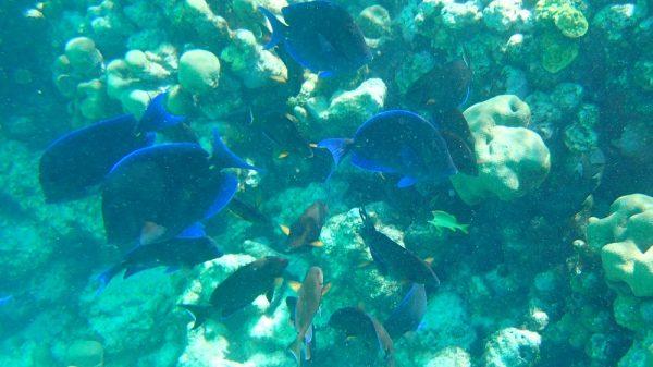 Viele Fische erwarten uns unter Wasser