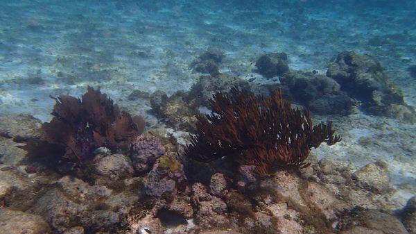 Tolle Unterwasserwelt