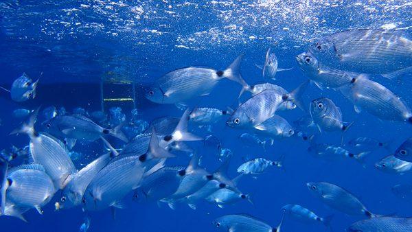 Fische unter der InsPIRATion