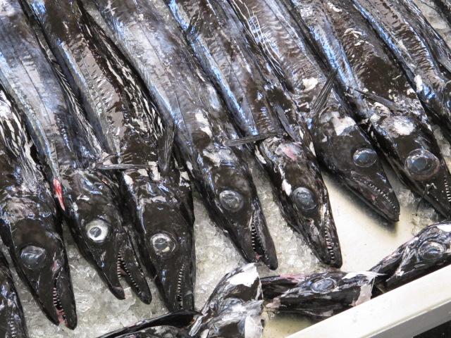 Wird auf 800m Tiefe gefangen, die Fischspezialität Madeiras, der Espada