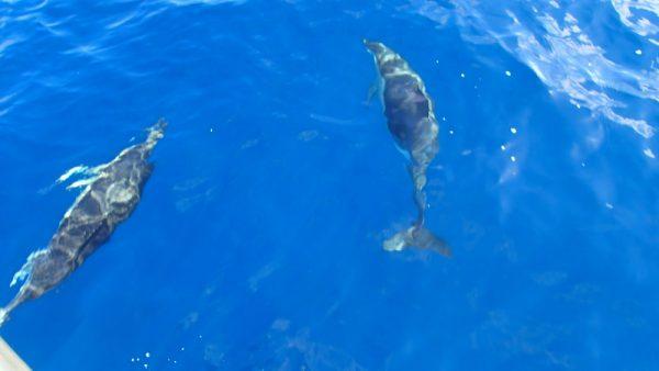 Und wieder mal Delphinbegleitung (InsPIRATion)