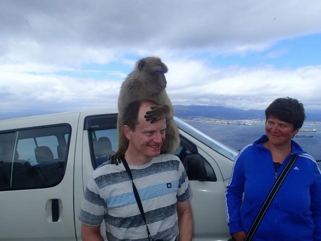 Oh mann, da kann man sich doch nur an die Stirn fassen-die Affen von Gibraltar