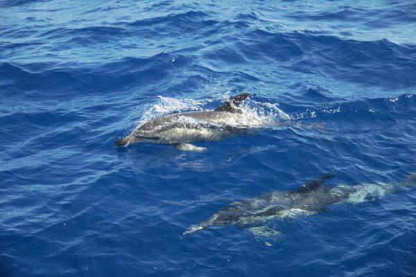 und wieder Delphinbegleitung