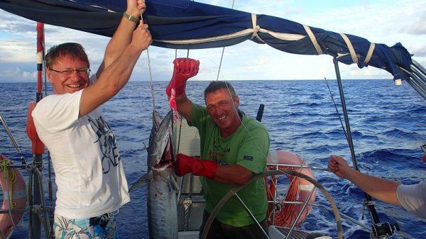 Ein 13 kg schwerer Wahoo, mit 80 kmh einer der schnellsten Fische