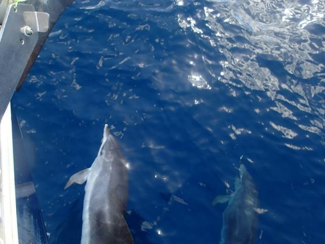 Die Habib hat Delphinbegleitung