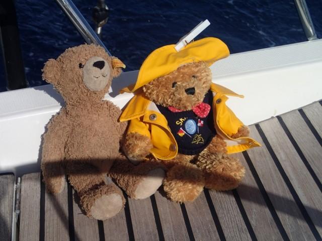 Bären auf hoher See