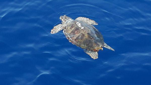 Schildkröte querab (Habib Sanna)