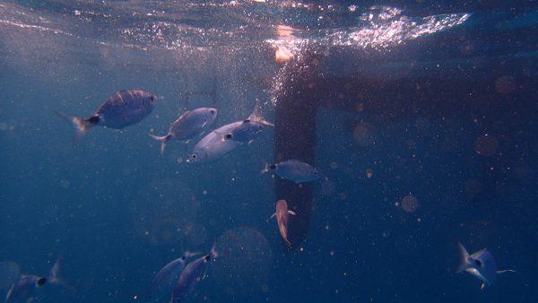 Fische unter dem Schiff