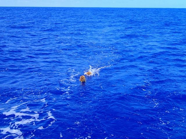die Sargassosee ärgert-uns - immer nur Seegras an der Angel statt Fisch