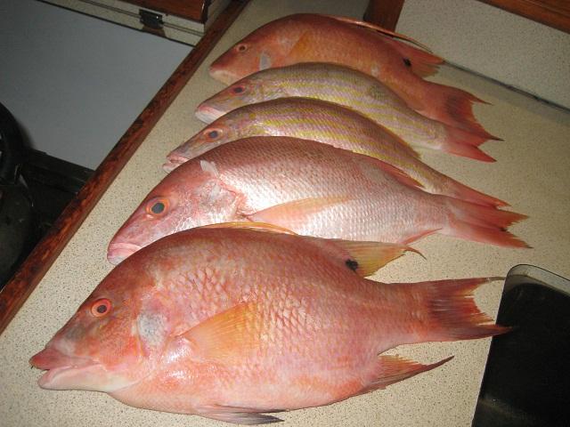frischer Fisch an Bord