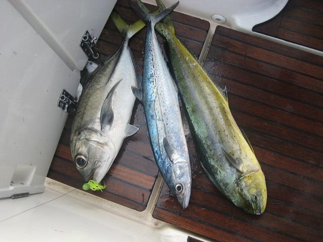 lecker Fisch (3 auf einen Streich)