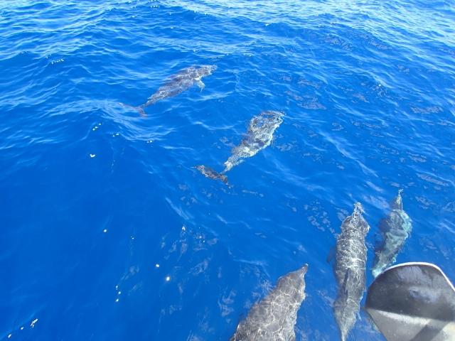 von nun an hatten wir jeden Tag viele Delfine - der Trost als Motorboot
