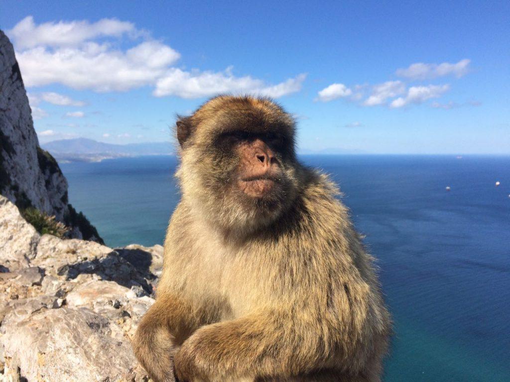 Die Inspiration ist wieder im Mittelmeer angekommen und wir statten den Affen von Gibralter einen Besuch ab