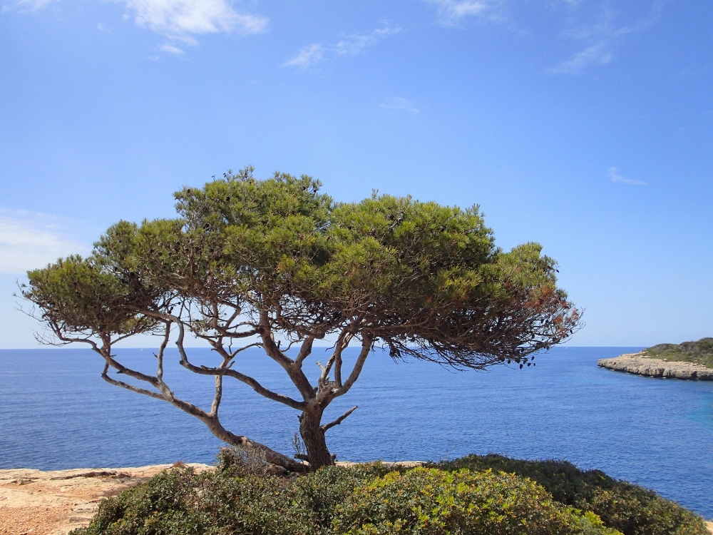 Mediterranes Flair