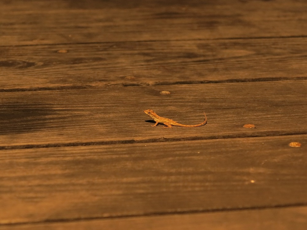 Ein Baby Gecko verliebt sich in Jörg und zieht in dessen Haupthaar ein! (Kein Witz)