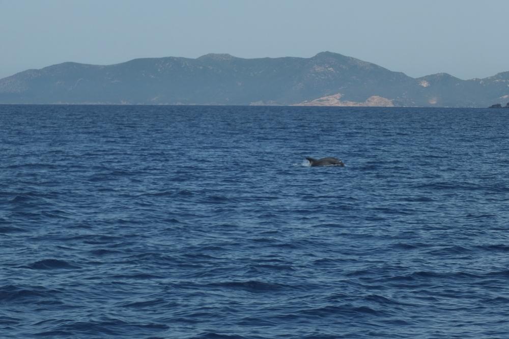 ein einzelner Delphin begleitet unsere Rückreise