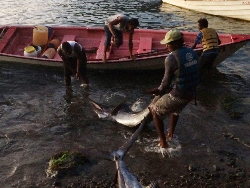 Die Einheimischen freuen sich über einen großen Fang – ein White Marlin hat gebissen