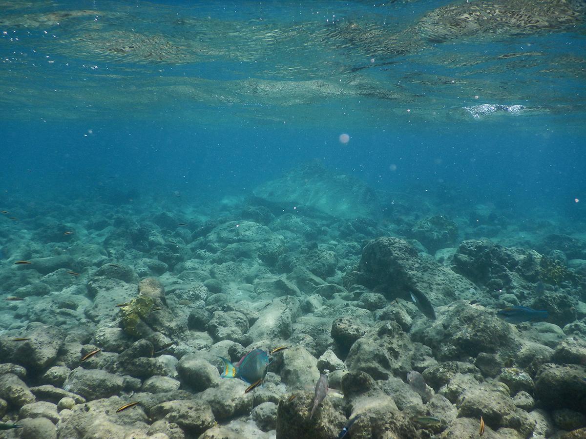 Unterwasseransichten