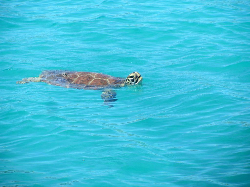 Jede Menge Schildkröten um uns herum in den Buchten