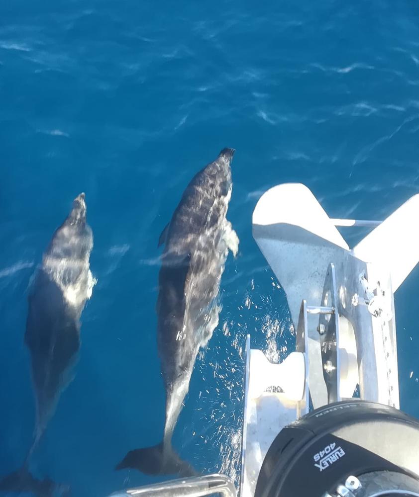 Auch den Delphinen gefällt unser neuer Anker