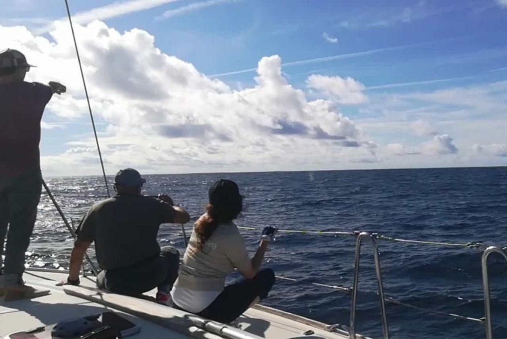 Wal – ganz da hinten bläst er
