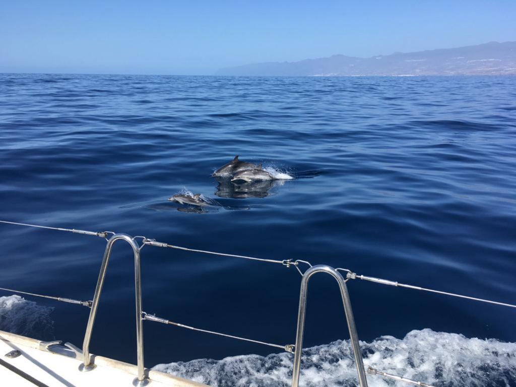 Delphin-Family 2020