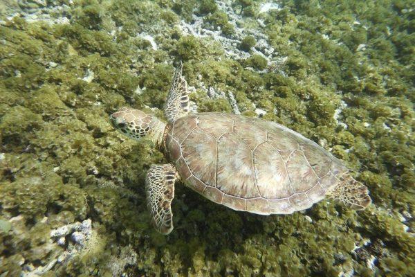 Guadeloupe Karibik