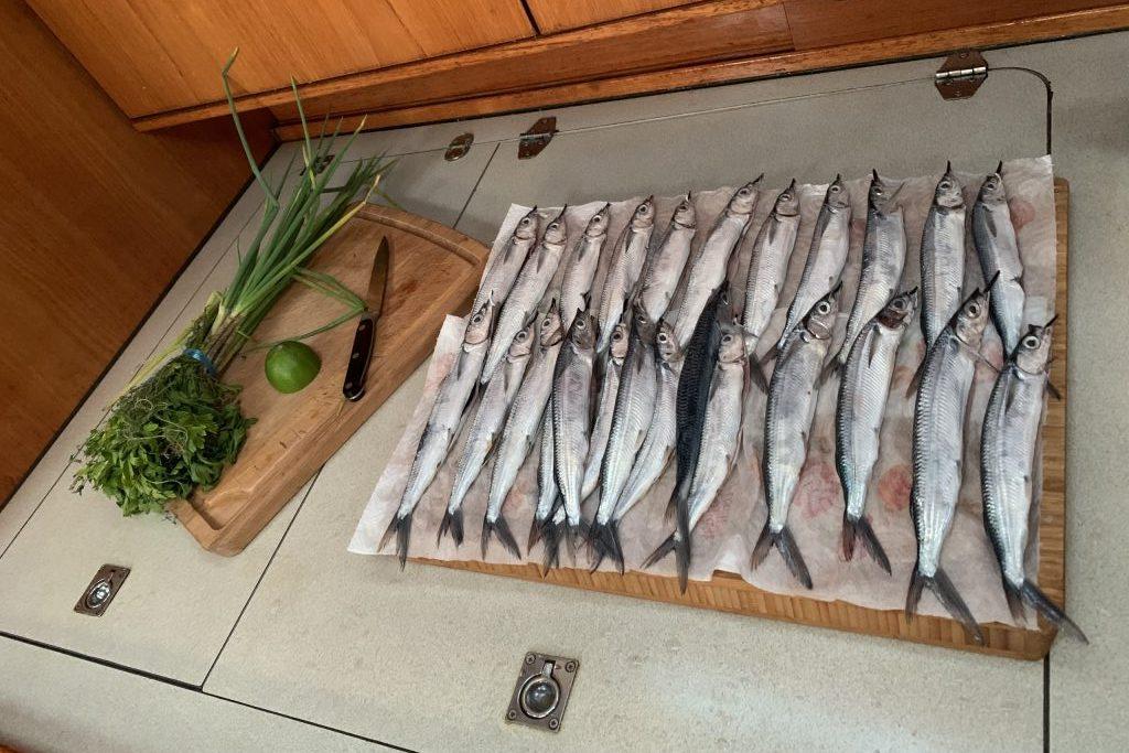 Leckere Beute vom Fischmarkt in St. Pierre