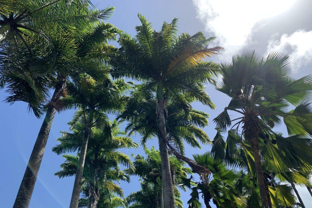Palmen Karibik