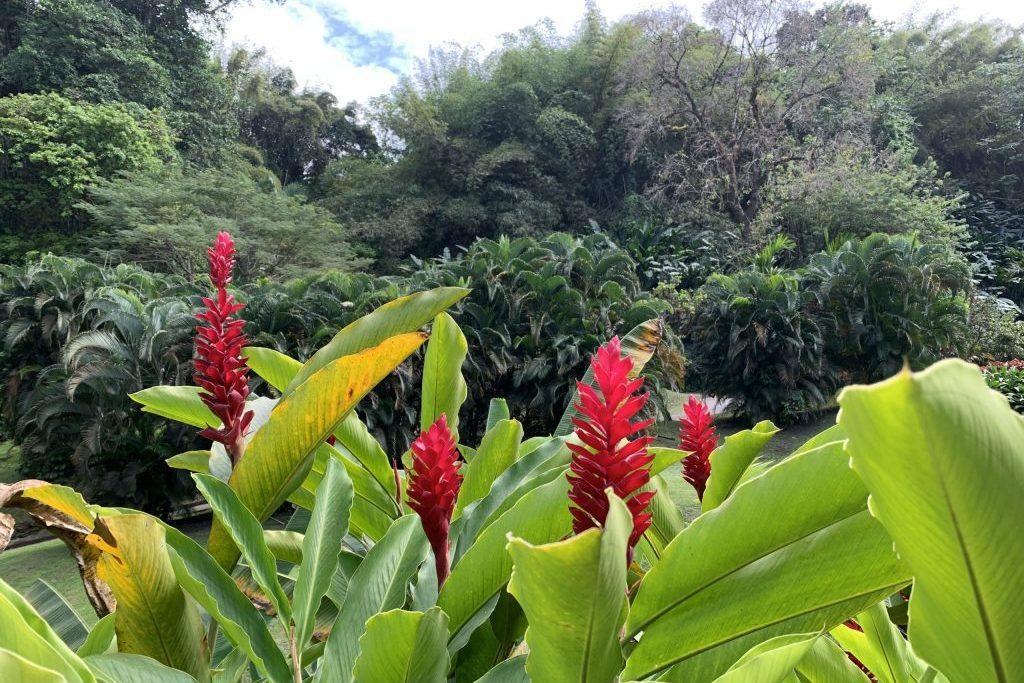 Segeln Martinique, Landgang