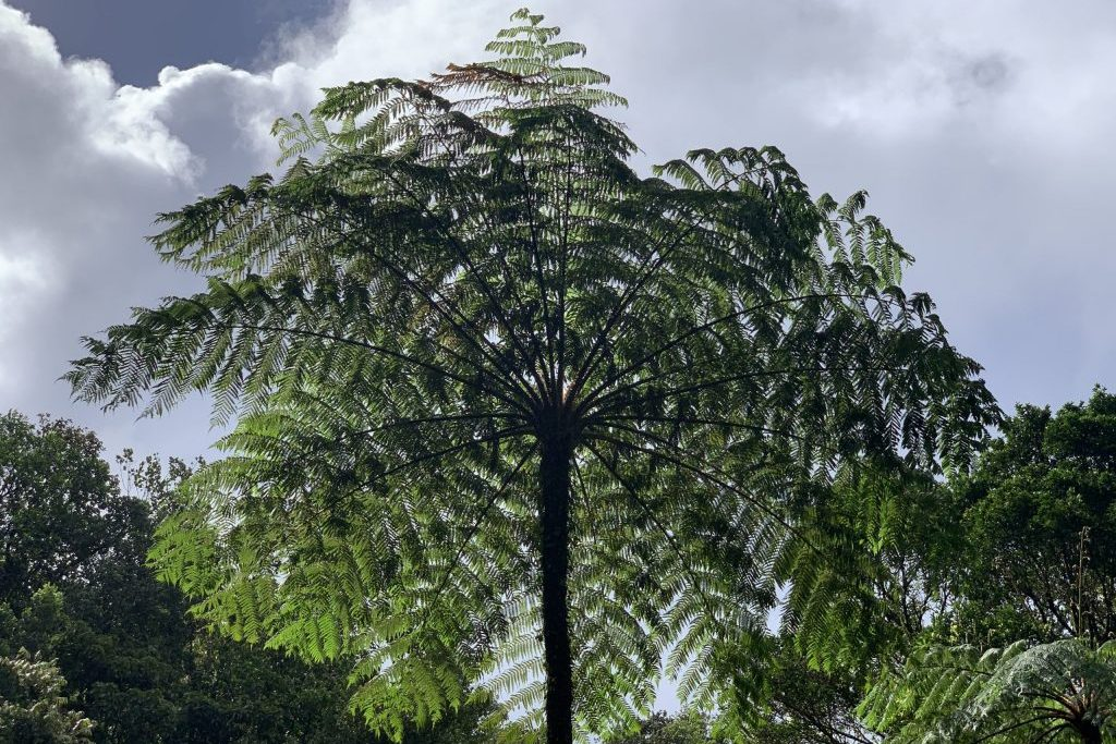 Segeln Karibik, Flora