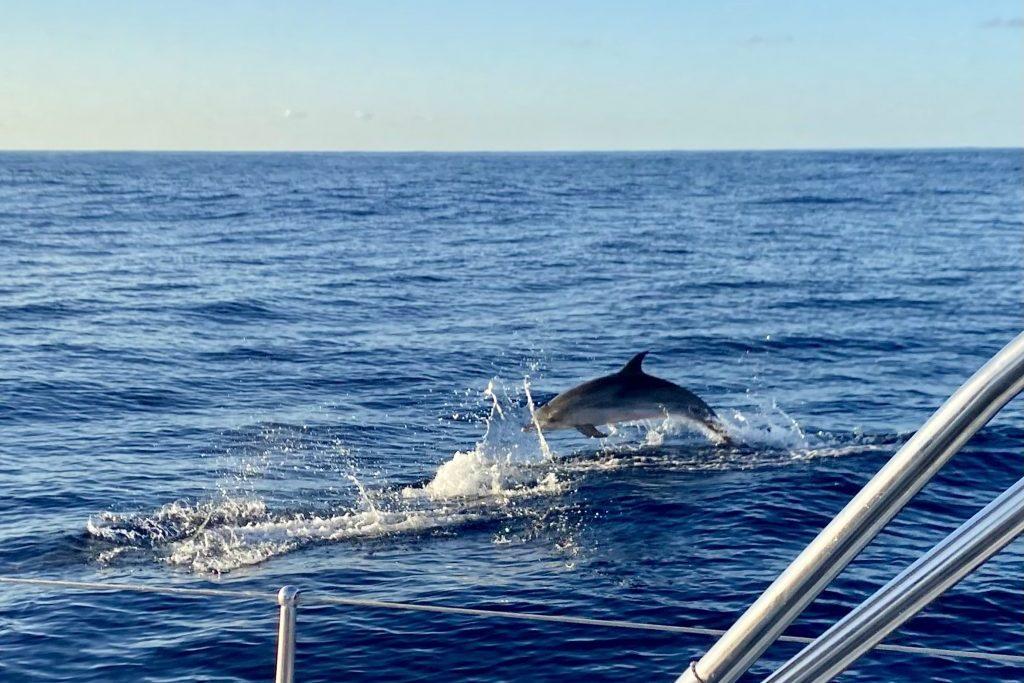 Delphine begleiten uns