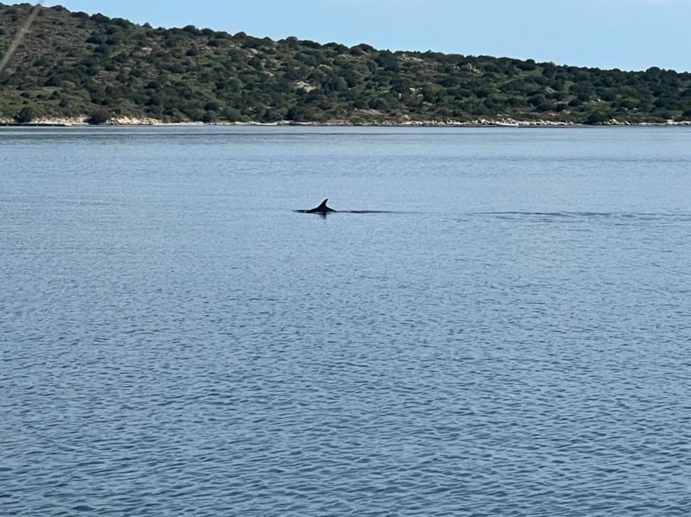Delphin zum Frühstück in der Ankerbucht bei Sardinien